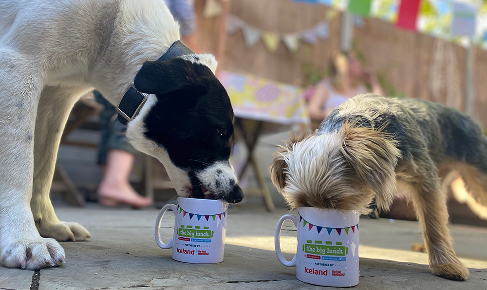 Dogs eating from a Big Lunch mug