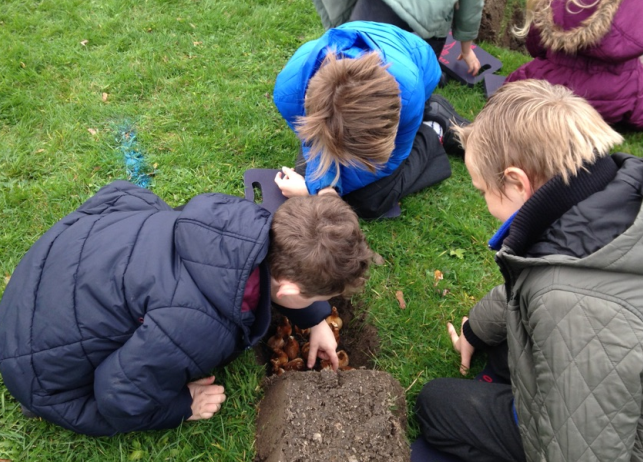 Photo of children planting bulbs