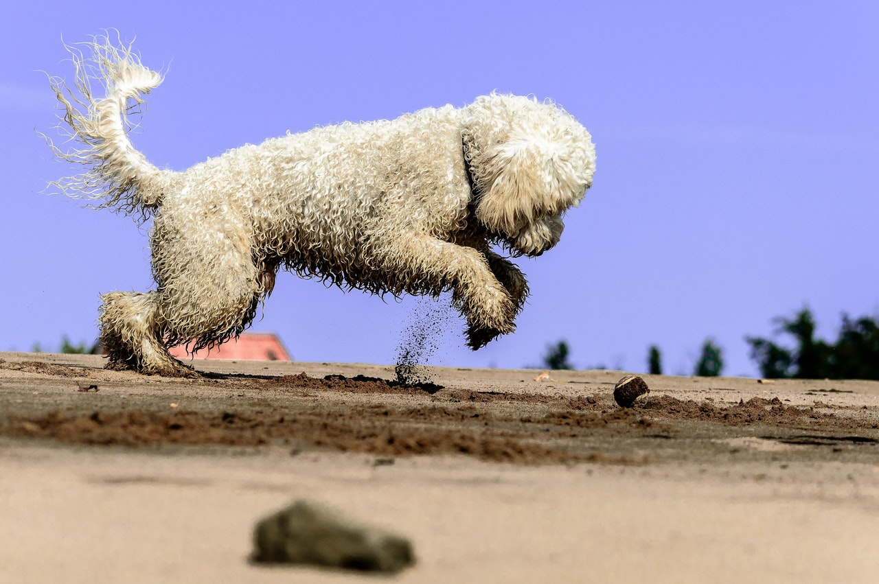 Photo of a dog playing on a beach