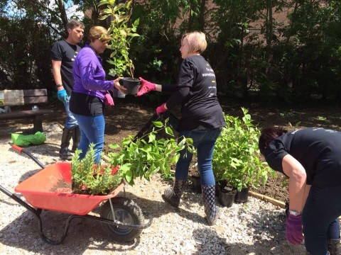Photo of people working together on community garden