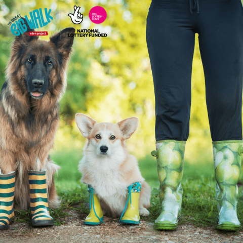 Two dogs and a woman all wearing gumboots.