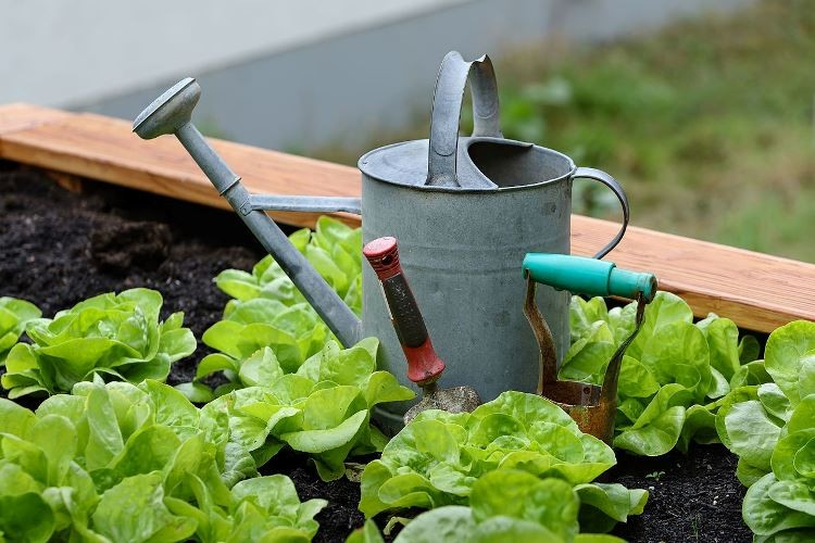 watering can and salad